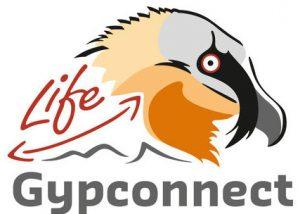lifegypconnect-logo