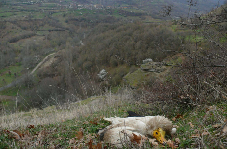 Balkan Anti-Poisoning Project: Country in Focus - FYR Macedonia