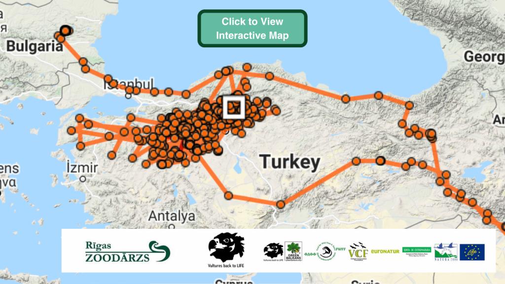 Boyan Cinereous Vulture GPS maps