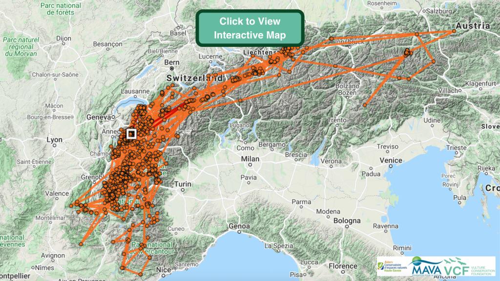 Gypsy Bearded Vulture GPS Maps