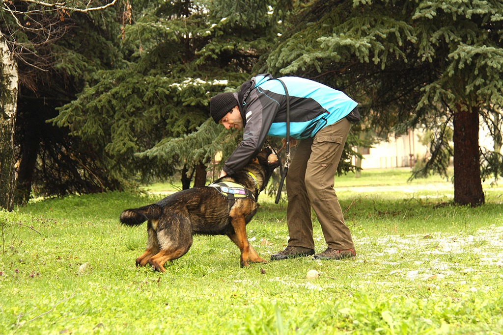 Nikolay and Bars – the first anti-poisoning dog unit in Bulgaria