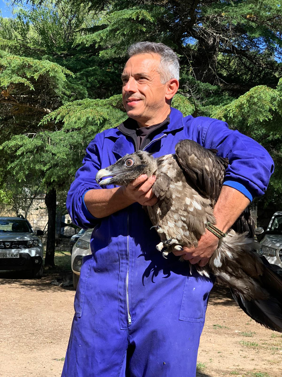 Bearded Vulture release spain andalusia