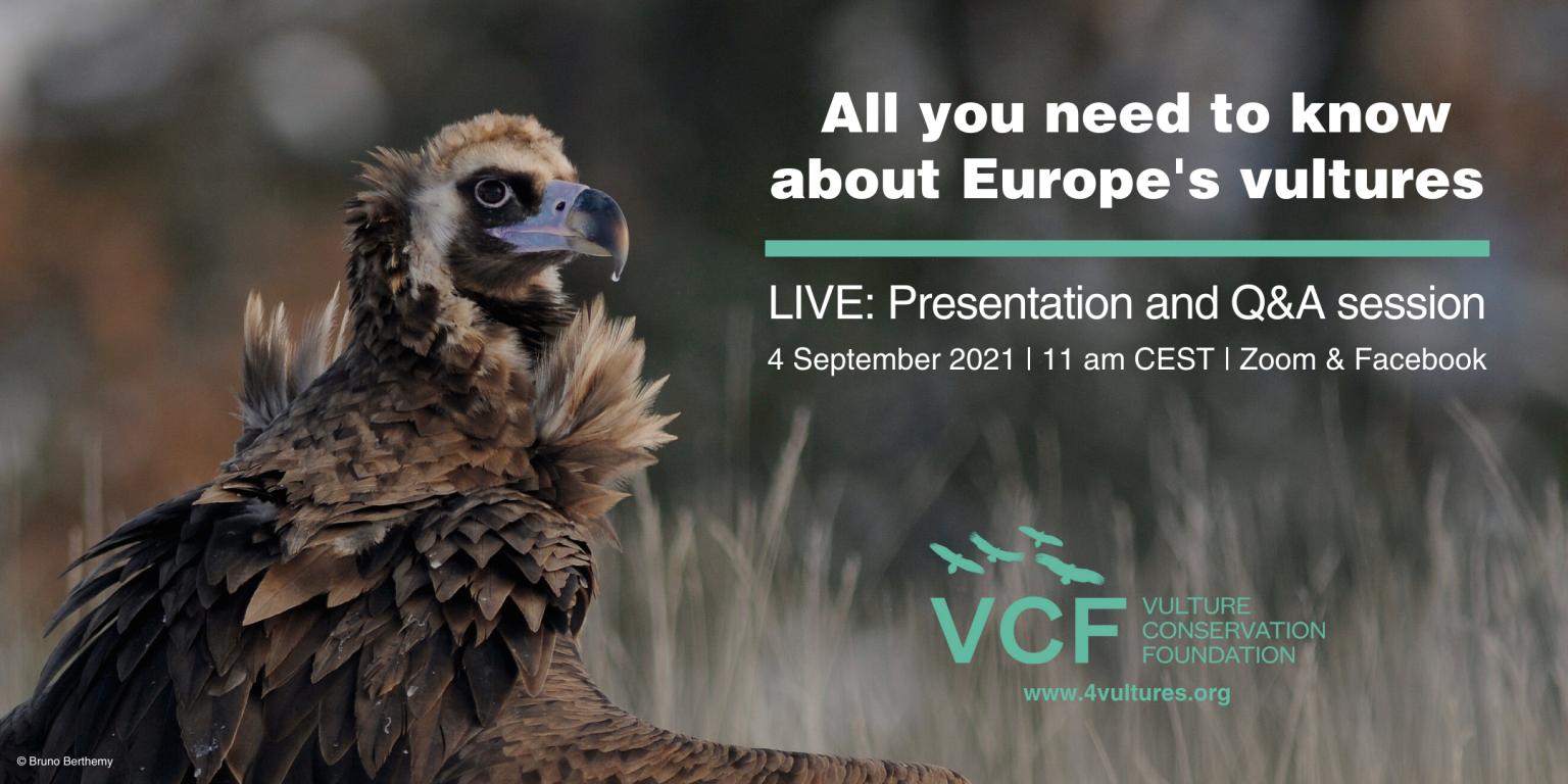 International Vulture Awareness Day event Europe's vultures