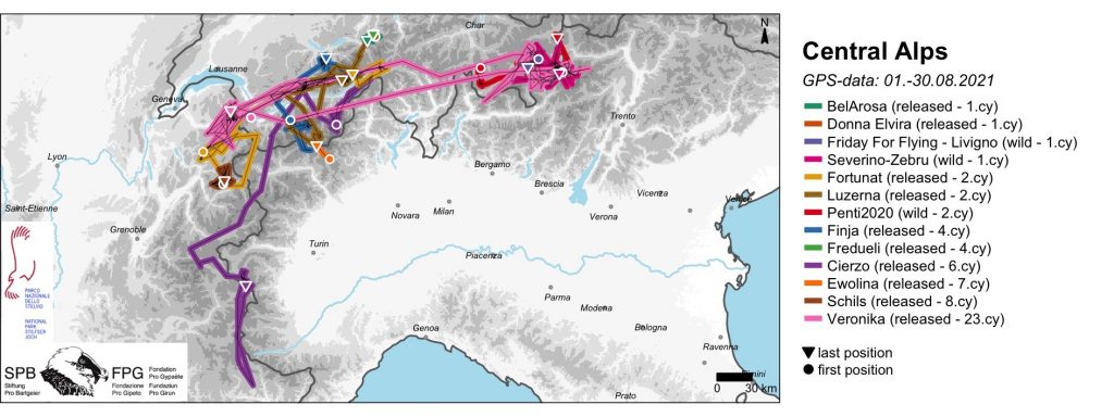 Bearded Vulture GPS Movements August 2021