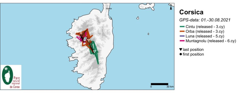 Corsica Bearded Vulture GPS Movements August 2021