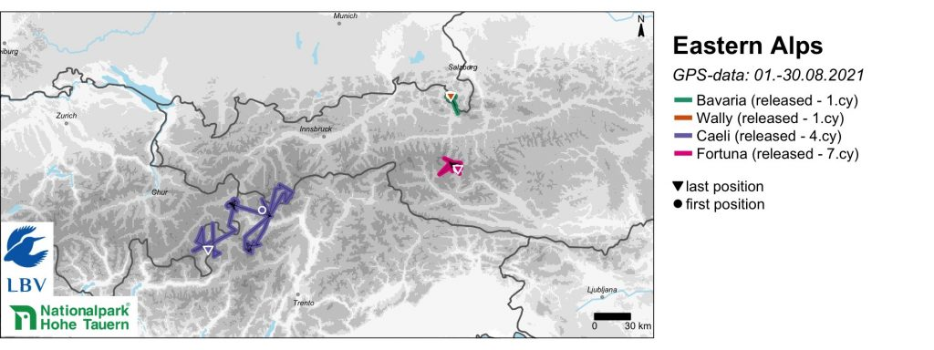 Alps Bearded Vulture GPS Movements August 2021