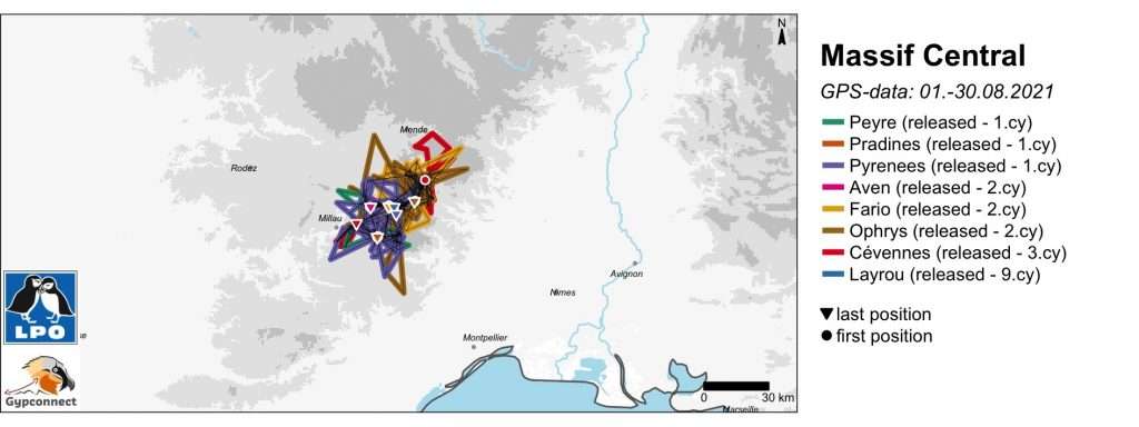 Massif Central Bearded Vulture GPS Movements August 2021
