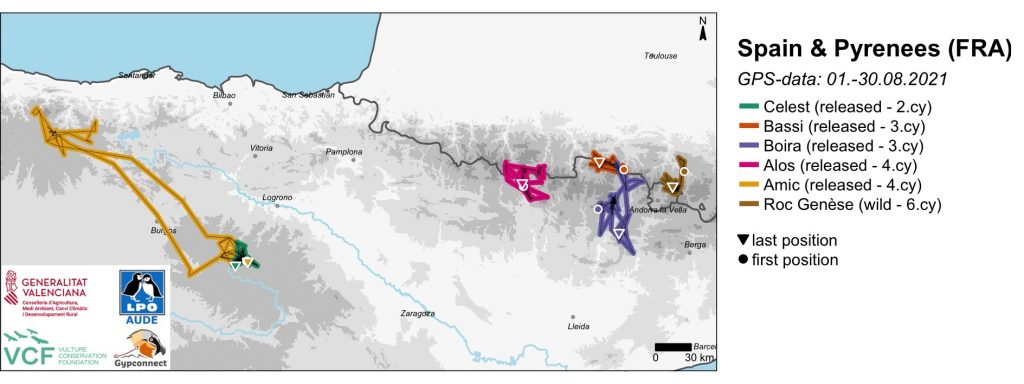 Spain Pyrenees Bearded Vulture GPS Movements August 2021