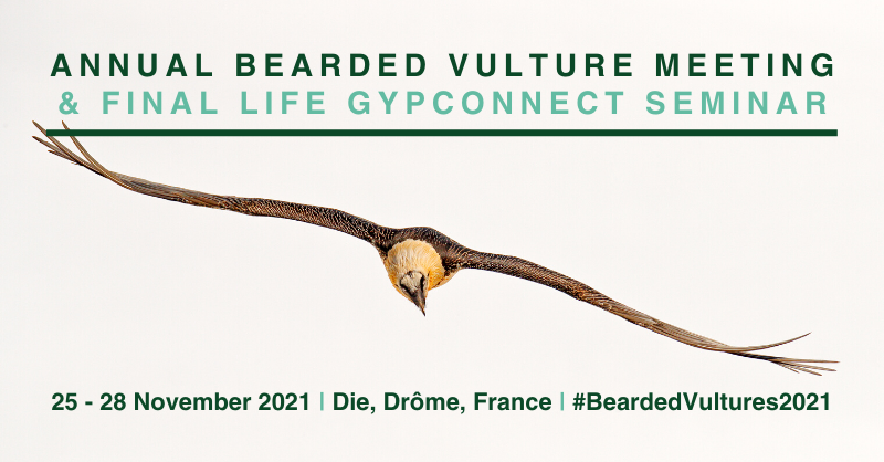 Annual Bearded Vulture Meeting and Final LIFE GypConnect Seminar link card