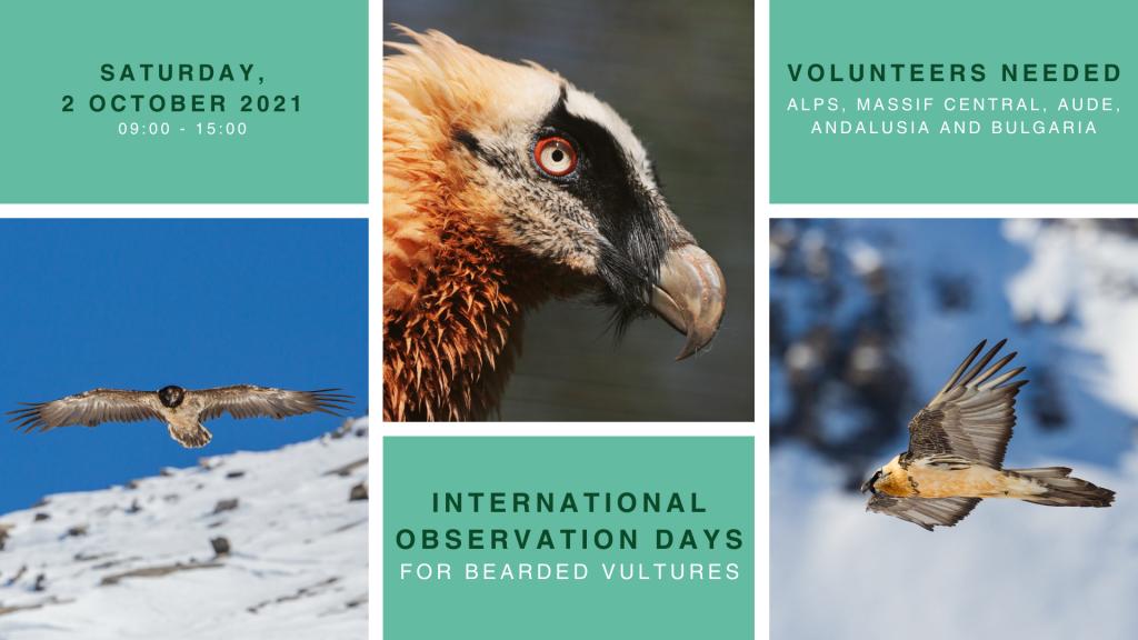 international observation days for bearded vultures