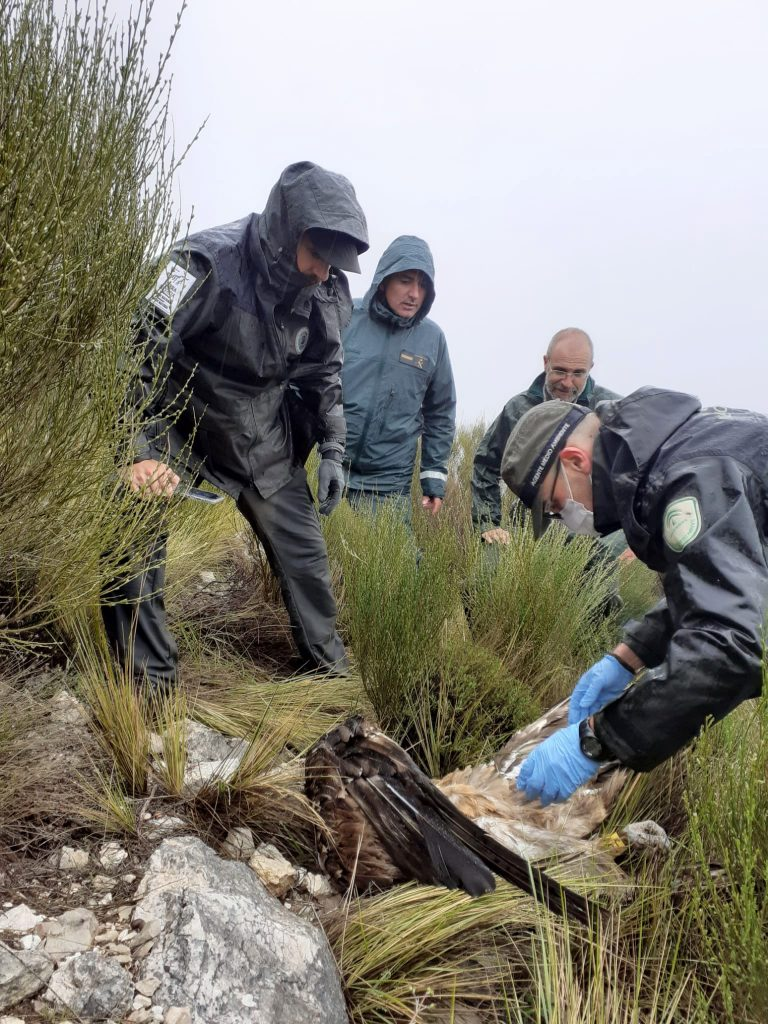 wildlife crime investigation in andalusia